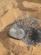 Le pain du désert
